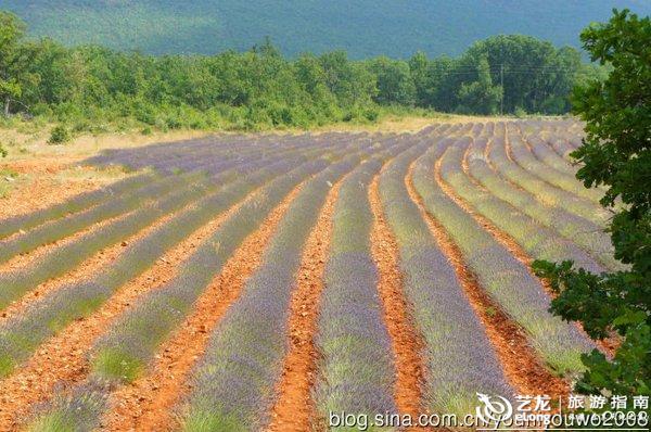 驾普罗旺斯寻找薰衣草 四 紫色的花海