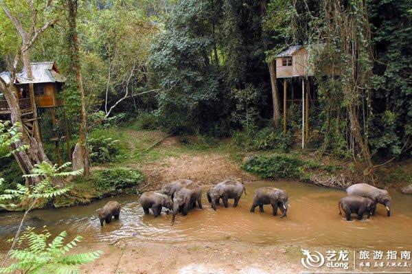 西双版纳神秘的热带雨林 野象谷寻访野象的踪迹图片