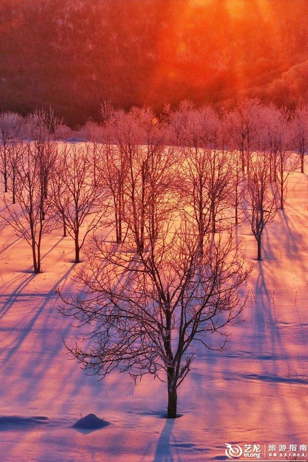 雪地被映衬成了粉红色