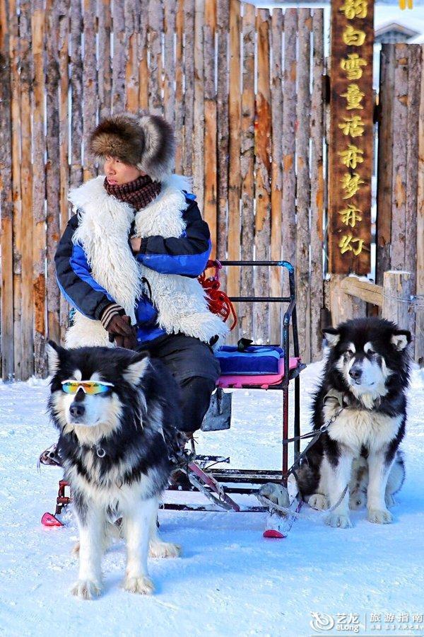 我发现去雪乡的人好像都拍这条墨镜狗