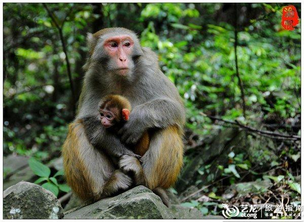 她是一个很喜欢小动物的女孩,在张家界尤其喜欢喂猴子,我们在金鞭溪
