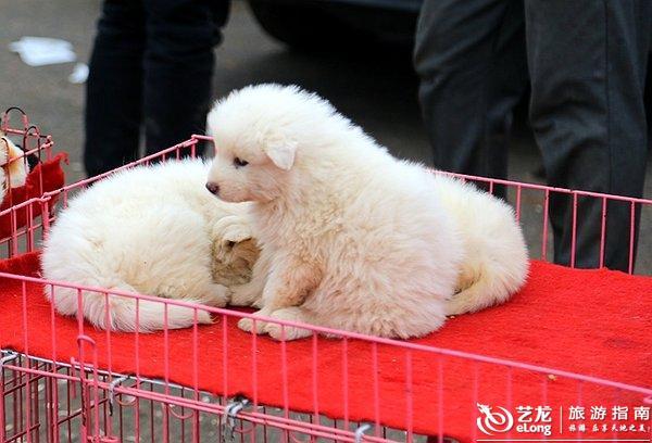 多可爱的小狗狗. 日常生活用品铺天盖地,最热销的是冬令用品.