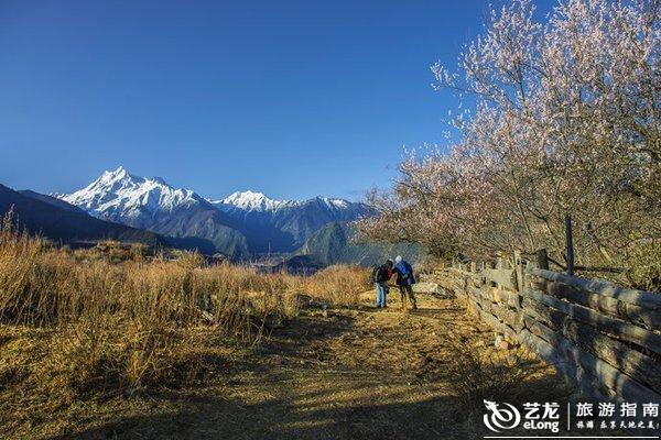 西藏林芝7所a级景区桃花节期间免费开放图片