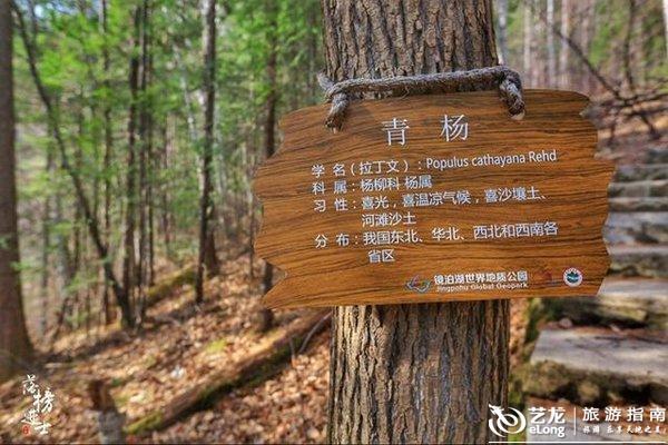 镜泊湖地下森林,探寻神秘的火山世界