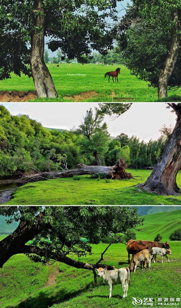 风.林.草.山.童话仙境.醉美牧场.新疆_那拉提
