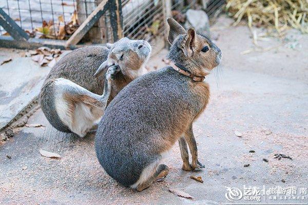 狸,还有山羊、小兔子、小马等,   可以买胡萝卜喂兔子.图片