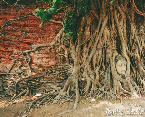 玛哈泰寺是大城最早建成的高棉式佛塔之一,不过现在只剩底部基座。  10 在玛哈泰寺终于亲眼所见这镇寺奇景,著名的树抱佛头。  11 关于这个景象的形成,我见过两种说法,一是在缅甸攻陷大城后进行的破坏和劫掠中,这颗佛头被敲落了,落在了菩提树下,几百年后,渐渐生长的树根就将这颗佛头缠绕起来了。另一说法是泰国人有把佛像供奉在菩提树下的习惯,然后就  12 蒙坤乌碧寺(Wihan Phra Mongkhon bophit)。  13 帕司山碧寺(Wat Phra Si Sanphet)。这是一座与曼