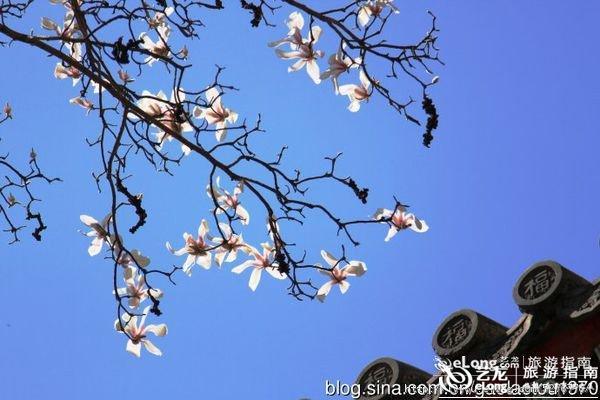 花开山水间 春暖花开到门头沟赏花踏青