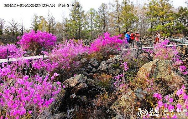 五月,龙江大地上哪里的杜鹃花最迷人?(附赏花攻略)