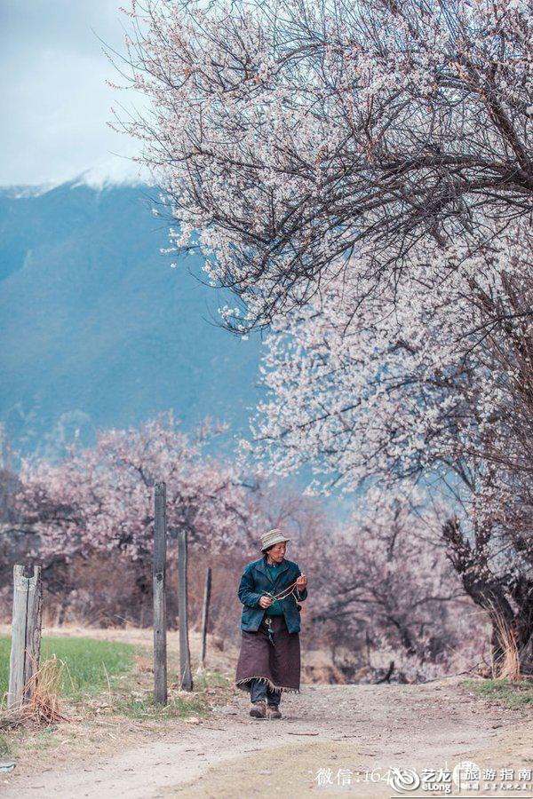 2018林芝桃花节时间已定,3月西藏邂逅天堂