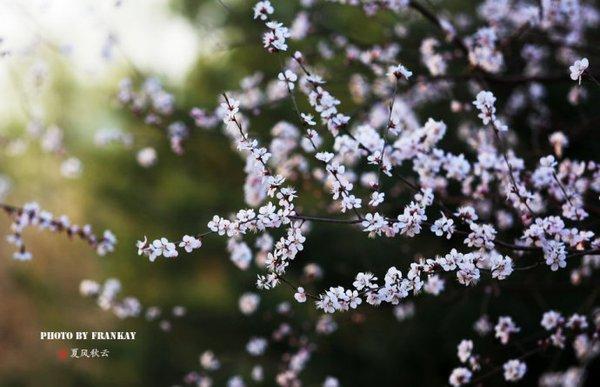 四月满城春色,广东吃喝玩乐活动大盘点