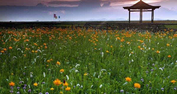 张北坝上草原图片