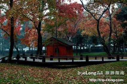 天平山楓葉