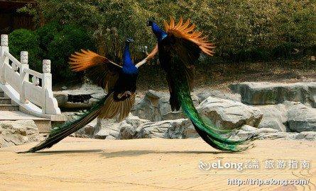 香江野生動物世界