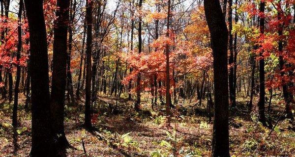 秋染红叶谷