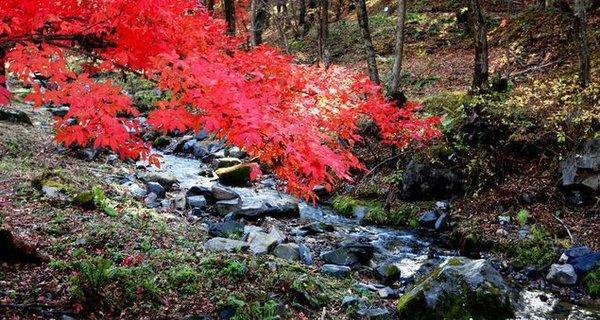 秋染紅葉谷