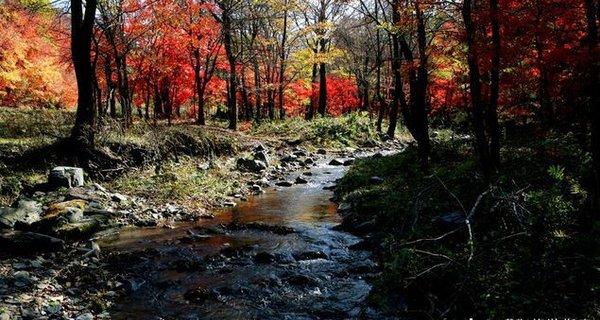 秋色紅葉谷