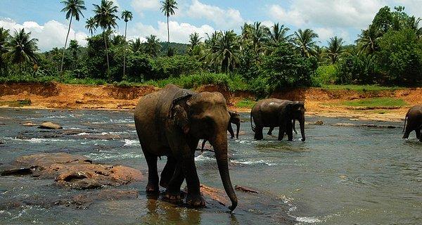 斯里兰卡图片