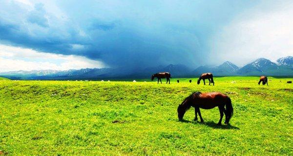 伊犁那拉提草原