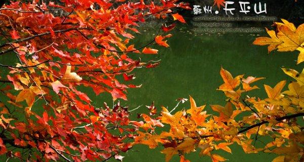 蘇州天平山紅葉
