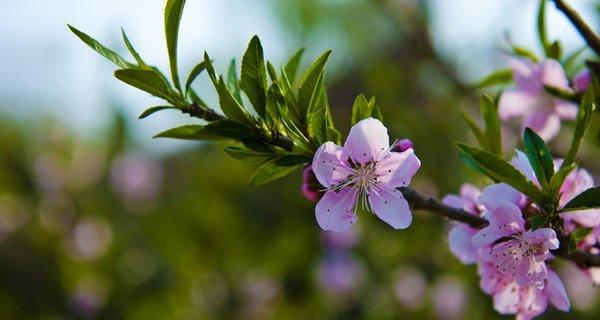 石家庄植物园春色