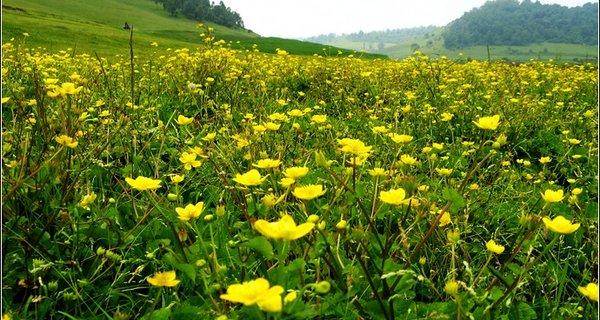 关山牧场图片