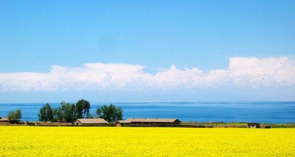 青海湖圖片
