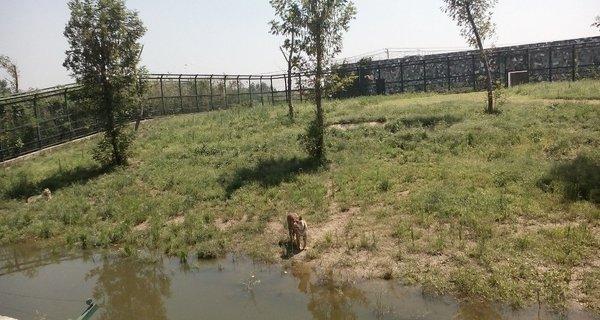 宿迁运河湾森林动物园位于宿迁市运河二号桥东首,宿豫现代农业产业园核心区,是一座集动物野趣观赏、休闲娱乐、科普教育为一体的大型综合性主题公园,成为全市第一家大型动物园,也是苏北最大动物园。动物园占地496亩,建成后的动物园不仅风景优美,动物种类繁多,计划引进狮子、