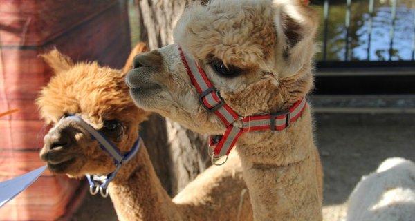 朝阳公园欢乐岛亲子动物乐园旅游