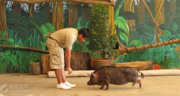 苏比克野生动物园旅游