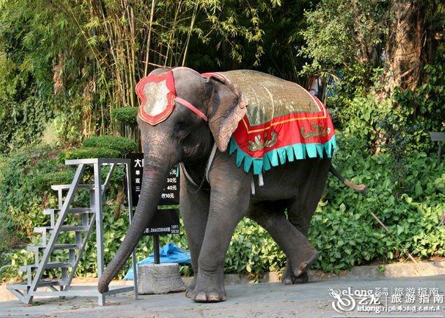 深圳野生动物园图片
