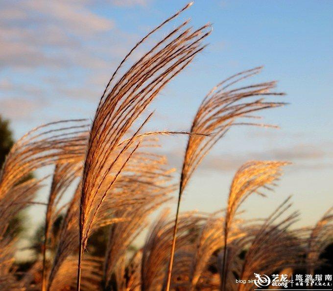 冰城馨子 金河湾湿地公园图片