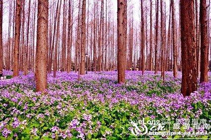 南京理工大学二月兰
