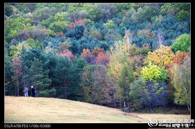森林公园里的花儿_冰城馨子_哈尔滨森林植物园图片