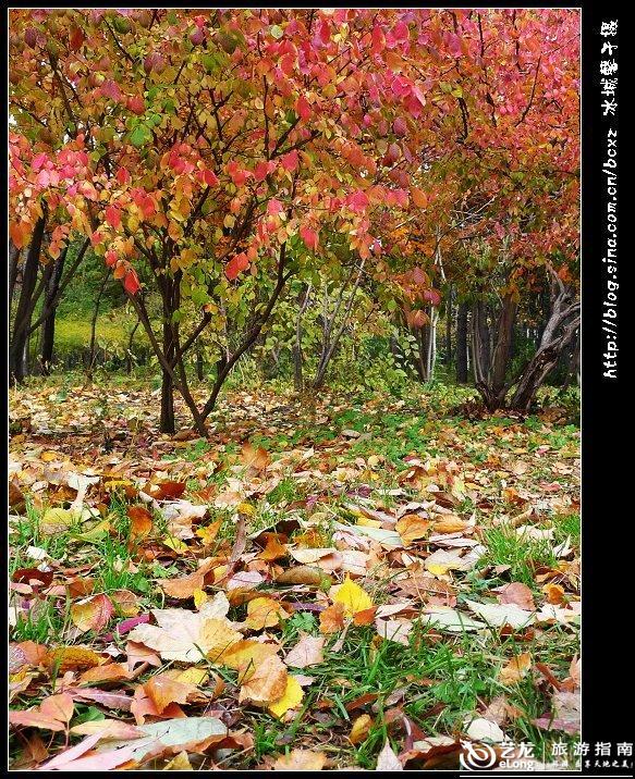 哈尔滨植物园图片