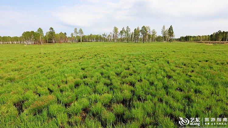 首页 黑龙江旅游 双鸭山旅游 青山森林公园旅游 青山森林公园图片