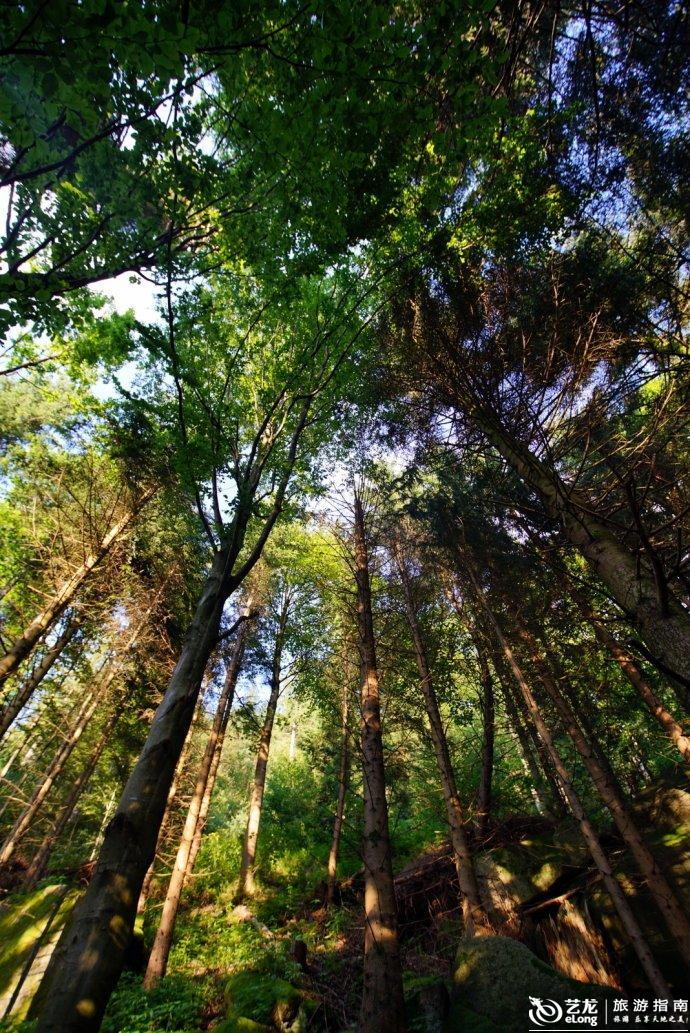 黑森林图片